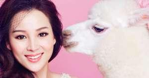 张可儿抱羊驼拍摄甜美写真大片
