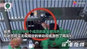 韩国艺人违规接触熊猫宝宝 引中国网友众怒