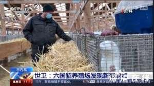 欧美六国貂养殖场现新冠病毒 具体是什么情况?